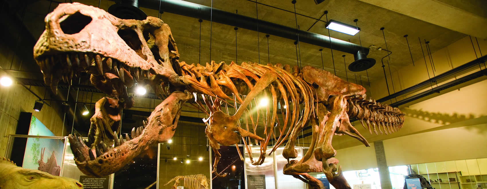 T rex Discovery Centre
